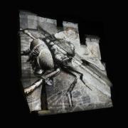 15_Christine-de-Boom_petrified-fly_2018-Fotografie-Lw80x80cm